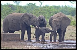 Young elephant interactions