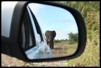 Elephant in the rear-view mirror