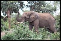 Elephant along the stream