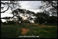 Scenery at Mokala National Park, April 2018