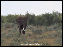 Tusker Ndlovane (2018/05/18)