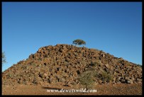 Rocky hill with Shepherd's Tree