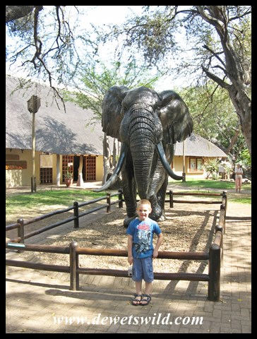 Letaba Elephant Hall