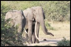 Tembe's Isilo (2013-05-24)