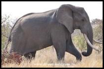 Ndlovane (2005/09/25)