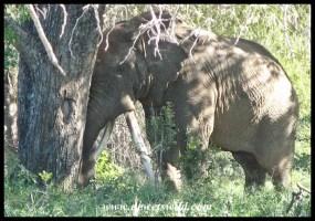 Ngunyupezi (2007/04/30)