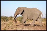 Unknown Kruger Tusker (2016/06/30)
