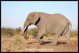Unknown Kruger Tusker (2016/06/30)