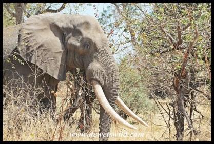Nkombo (2014/09/25)