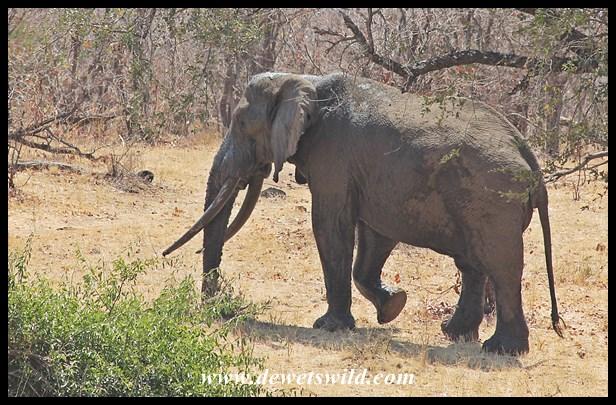 Nkombo (2014/09/27)