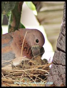Parent feeding the chicks