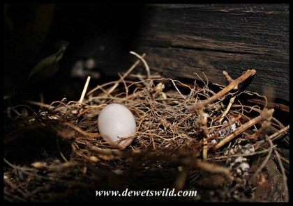 The first egg was laid on the 28th of October