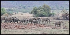 Big Elephant herd at Makorwane