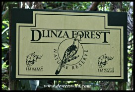 Dlinza Forest Nature Reserve