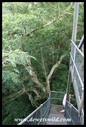 Observation tower on the Dlinza Forest Aerial Boardwalk