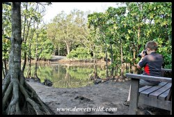 A quiet spot in the mangrove swamp