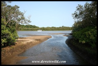 Channel in the mangrove swamp at Umlalazi