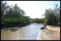 Boardwalk through Umlalazi's mangrove swamp