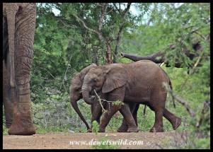 Baby elephant friends