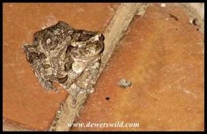 Foam Nest Frog