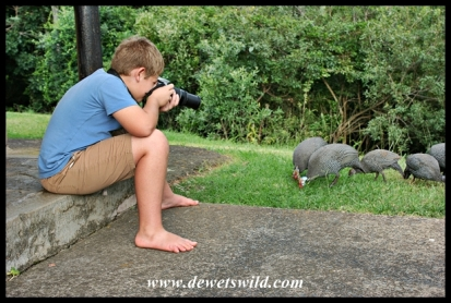 9 years old: March 2019. Joubert photographing guineafowl at Thendele