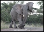 This elephant cow didn't appreciate our presence one bit, even though we gave her plenty of space!