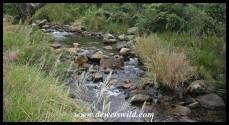 Mahai stream