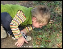 3 Years old: August 2012. Something's very interesting on the ground at Midmar Nature Reserve.