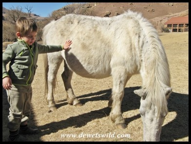 3 Years old: July 2013. Almost as high as a pony! Golden Gate Highlands National Park.