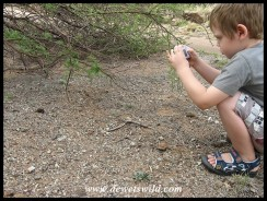 4 Years old: November 2013. Taking photos of dung beetles in Pilanesberg National Park is serious business!