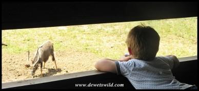 5 Years old: December 2014. Wildlife photography at kuMasinga Hide at uMkhuze Game Reserve.