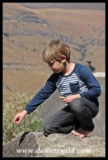 6 Years old: August 2015. Scientific experiment from atop a boulder at Tendele in Royal Natal.