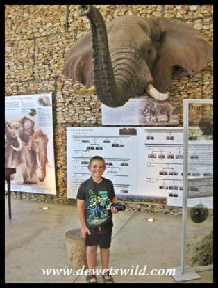 8 Years old: December 2017. In the information centre at Addo Elephant National park