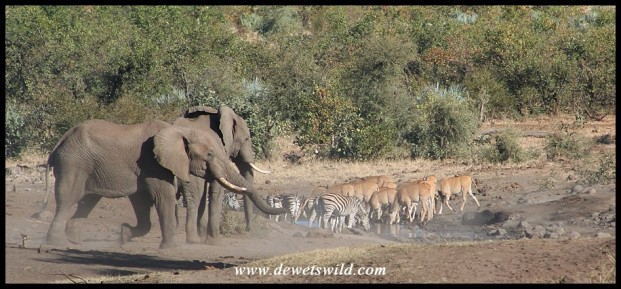 Eland, zebras and Elephants share a waterhole north of Babalala (Photo by Joubert)