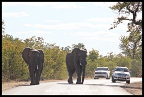 Elephant roadblock