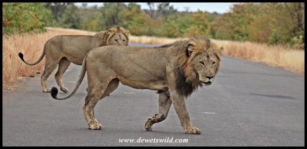 The two Kings of Babalala