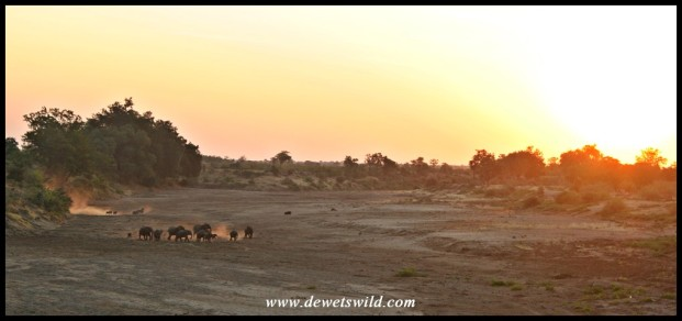 The last photo taken today - sunset over the dry bed of the Shingwedzi River
