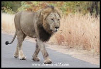 One of the two Kings of Babalala
