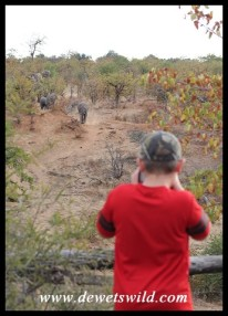 9 years old: June 2019. Photographing elephants near Shingwedzi in the Kruger National Park