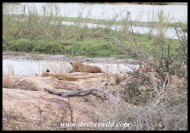 Lions lazing on the rocks at Lubyelubye