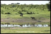 Ximangwaneni waterhole
