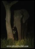 Elephant shy of the spotlight