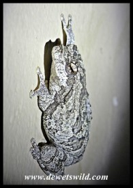 Foam Nest Frog on a bathroom wall