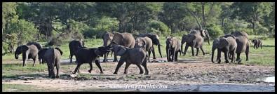 Elephants at Welverdiend waterhole