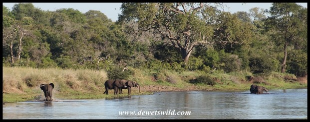 Elephants at Gudzani Dam