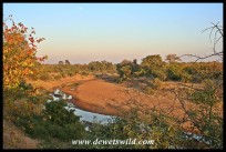A wide bend in the Shingwedzi River