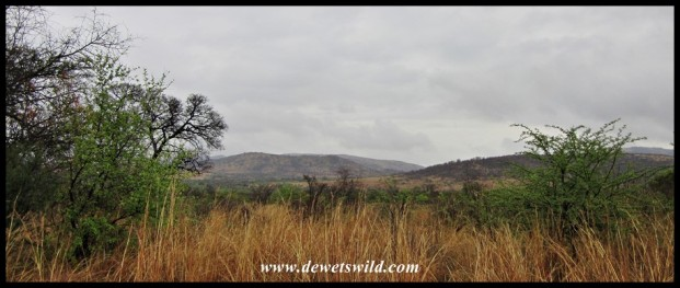 Pilanesberg scenery along Kgabo Drive