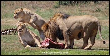 Feeding time at the Rhino & Lion Nature Reserve