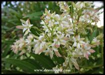 Unidentified blooms in Wilderness