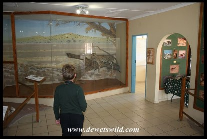 Nossob has an information centre dedicated to the Kalahari's predators
